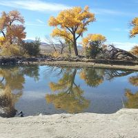 carson river with fall trees