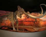 Nevada's Changing Earth Exhibit - Nevada State Museum