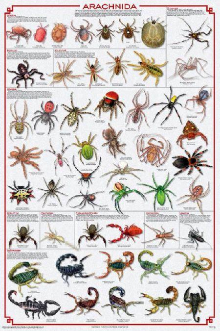 All About Arachnids | Western Nevada College Fallon