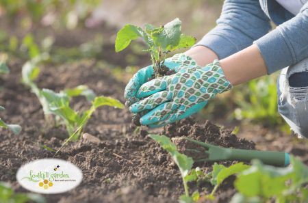 Carson Tahoe Health, Save the Soil: Solving Problems by Reducing Erosion w/ William Pierz
